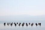 קבוצת נשים ייחודית במים